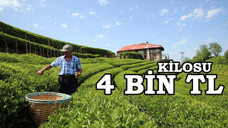 Kilosu 4 Bin Lira Beyaz Çay, Yok Satıyor