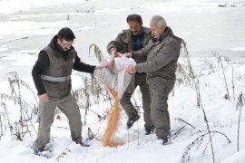 Yaban Hayvanları İçin 1 Ton Yem Bırakıldı