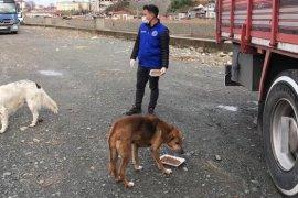 Pazar'da Sokak Hayvanları Unutulmadı