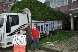 Rize'de Özel Sektör 3,5 TL'den Yaş Çay Alıyor