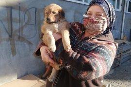 Ardeşen'de Sokak Hayvanları Unutulmadı