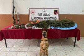 Rize'de İki İlçede Esrar ve Tabanca Operasyonları