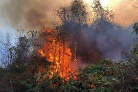Ardeşen'de Orman Yangını - 30 Dönüm Zarar Gördü