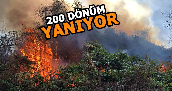 Pazar'da 200 Dönümü Etkileyen yangın