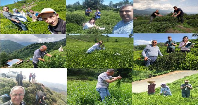 Çay Gen Havuzu Kazandıracak Projede 6 Ay Bitti