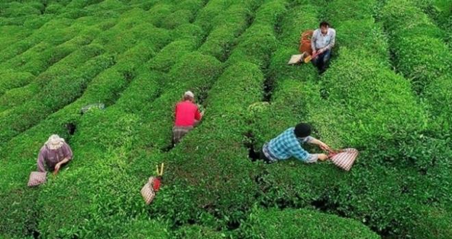Bankalar Çay Üreticilerine Promosyon Ödesin