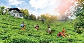 Tarım Üreticilerine Destek Ödemeleri Başlıyor